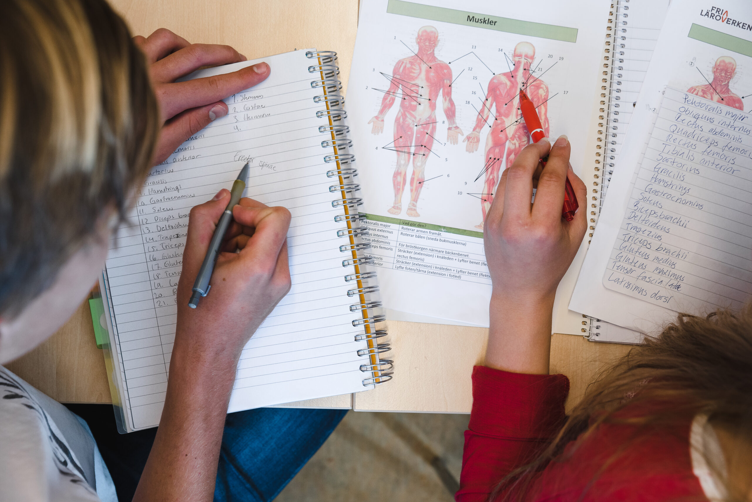Elever studerar människans anatomi i en bok