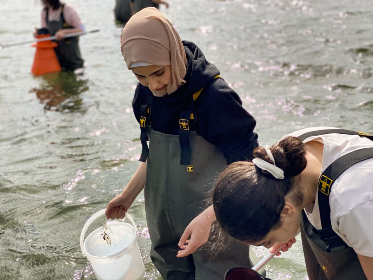 Visar två elever som håvar olika arter i havet.